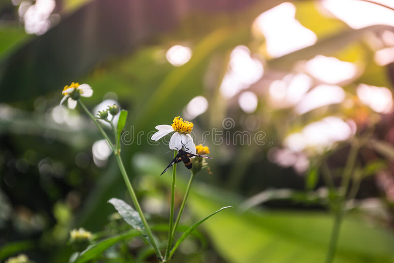 Fiori con le farfalle fotografia stock