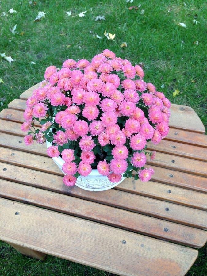 Fiori conservati in vaso fotografia stock