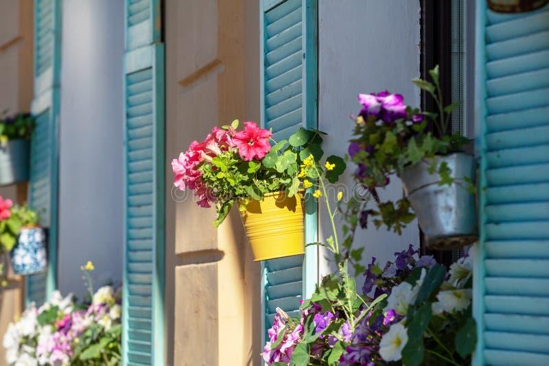 Fiori conservati in vaso sulla finestra con gli otturatori blu fotografie stock