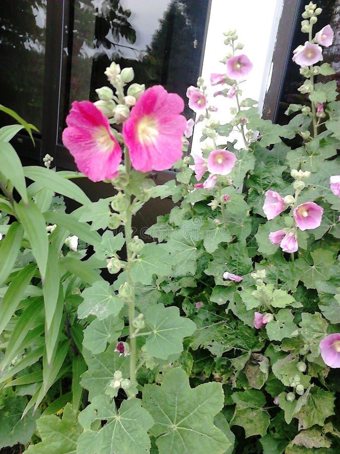 Fiori in cortile! fotografia stock libera da diritti