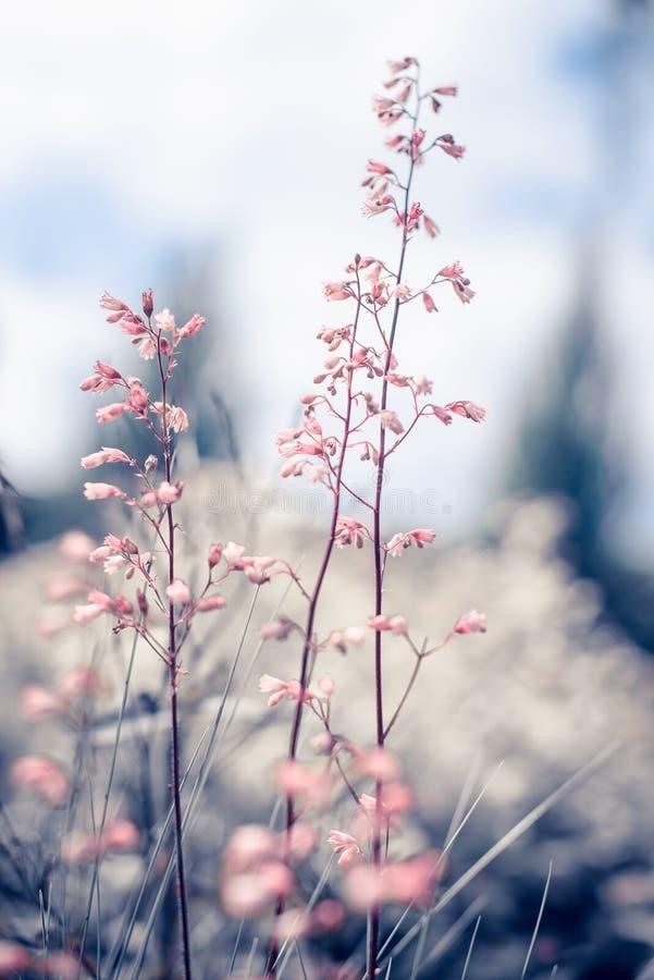 Fiori d'annata di estate bei su alba immagini stock