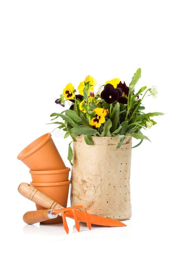 Fiori dalla memoria pronta ad essere conservato in vaso fotografia stock