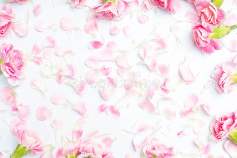fiori dei garofani su un bianco fotografia stock libera da diritti