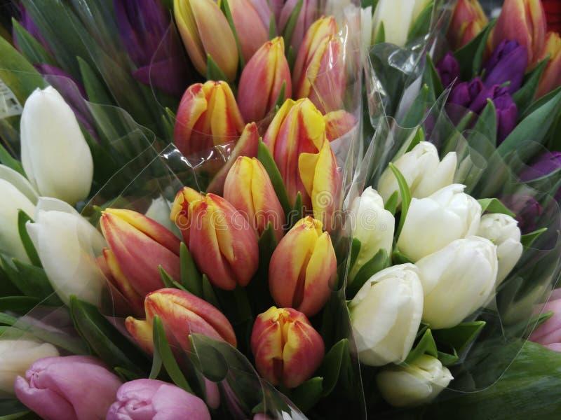 Fiori dei tulipani Mazzi dei tulipani rosa gialli bianchi Composizione nel fiore Piovuto appena sopra immagine stock libera da diritti