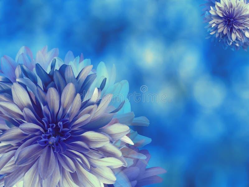fiori del Blu-turchese, su fondo vago blu closeup Composizione floreale luminosa, carta per la festa collage di flusso royalty illustrazione gratis