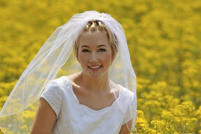 fiori del campo della sposa fotografia stock