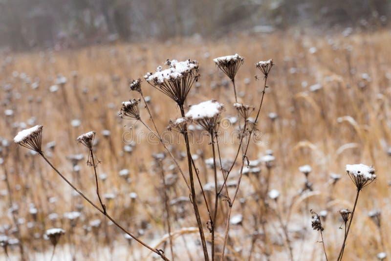 Fiori del campo nell'inverno fotografie stock libere da diritti