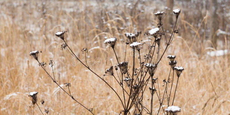 Fiori del campo nell'inverno fotografia stock libera da diritti