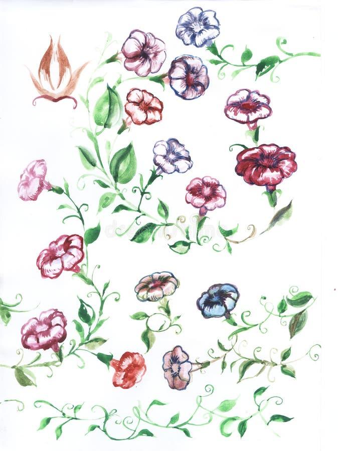 Fiori del convolvolo, pittura dell'acquerello royalty illustrazione gratis