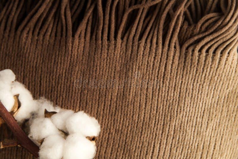 Fiori del cotone sul primo piano marrone della sciarpa del tessuto Disposizione minima concetto del tipo di di casa fotografie stock