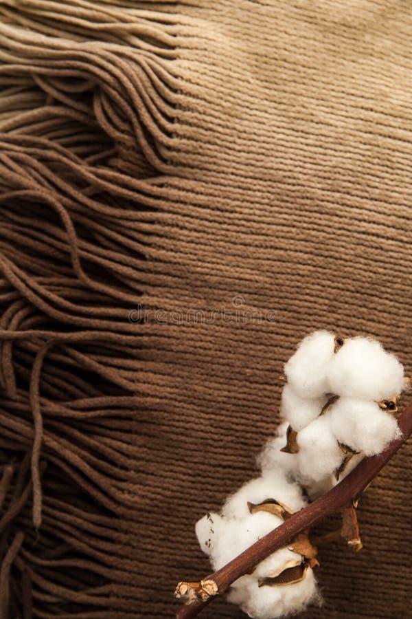 Fiori del cotone sul primo piano marrone della sciarpa del tessuto Disposizione minima concetto del tipo di di casa immagini stock