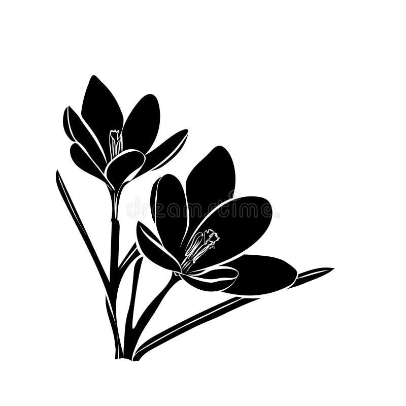 Fiori del croco in sole di primavera Scheda elegante dell'annata illustrazione vettoriale