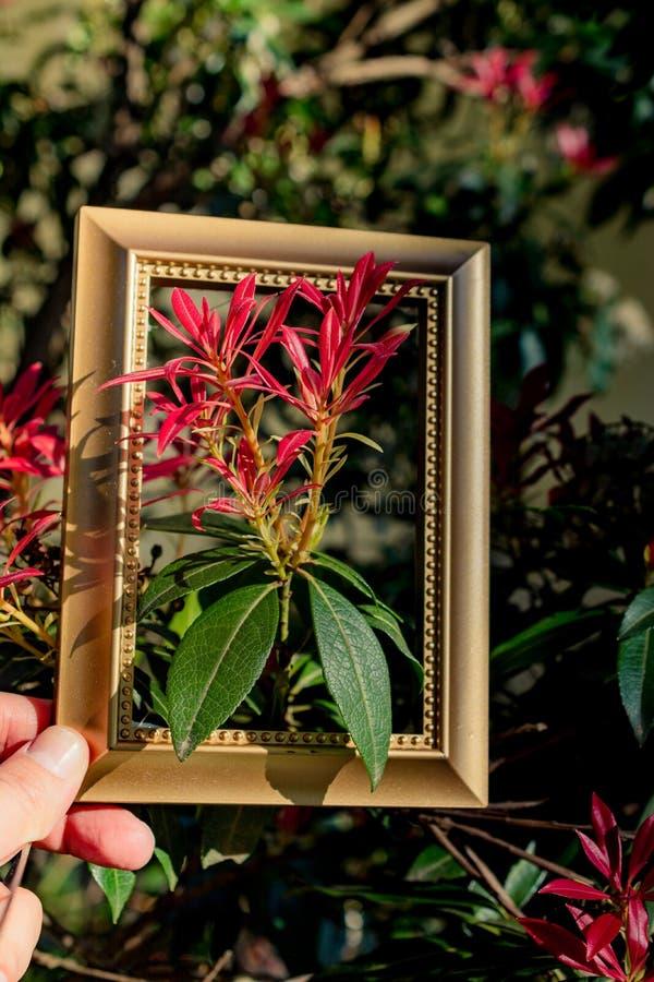 Fiori del fiore della fioritura dell'albero bei nel telaio fotografie stock