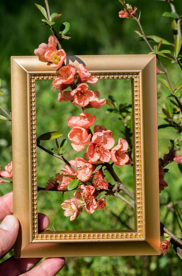 Fiori del fiore della fioritura dell'albero bei nel telaio immagine stock libera da diritti