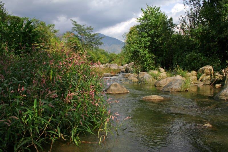 Fiori del flusso e della sorgente della montagna fotografia stock
