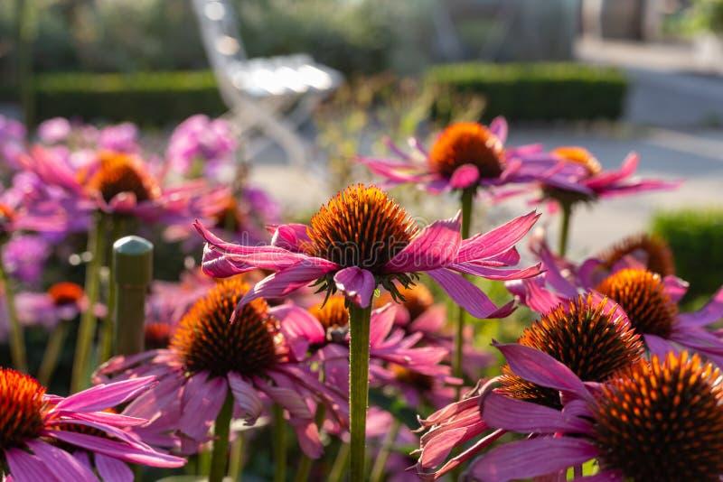 fiori del giardino del cottage fotografia stock
