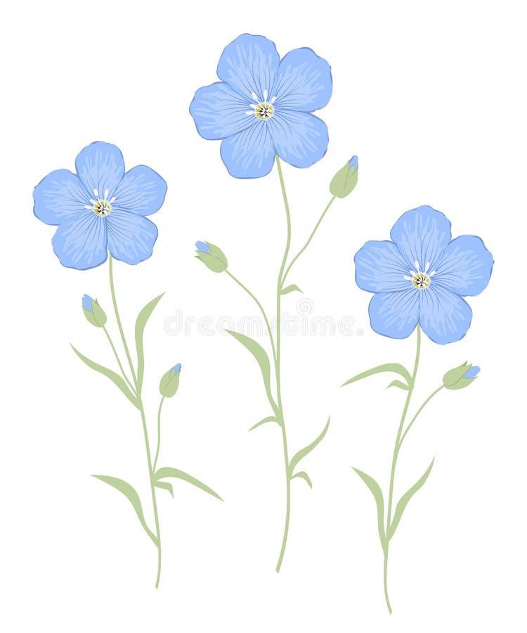 Fiori del lino isolati su un fondo bianco Fiori blu con le foglie verdi illustrazione vettoriale