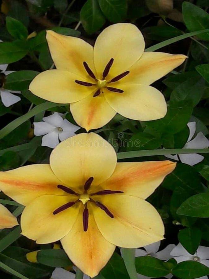 Fiori del mio giardino fotografia stock