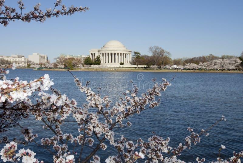 Fiori del monumento e di ciliegia del Jefferson fotografia stock