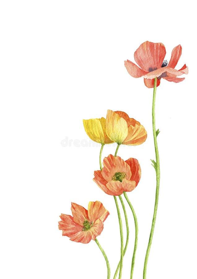 Fiori del papavero del disegno dell'acquerello royalty illustrazione gratis