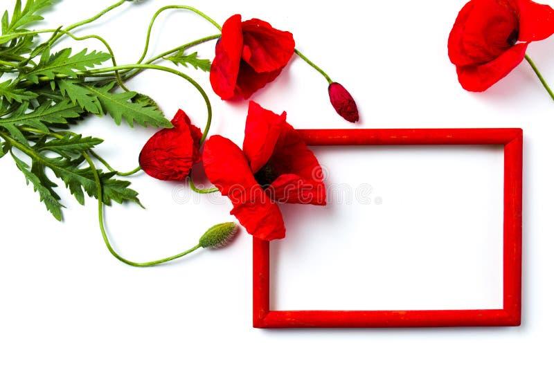 Fiori del papavero e struttura di legno rossa su bianco fotografia stock