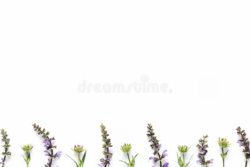 Fiori del prato su fondo bianco fotografia stock