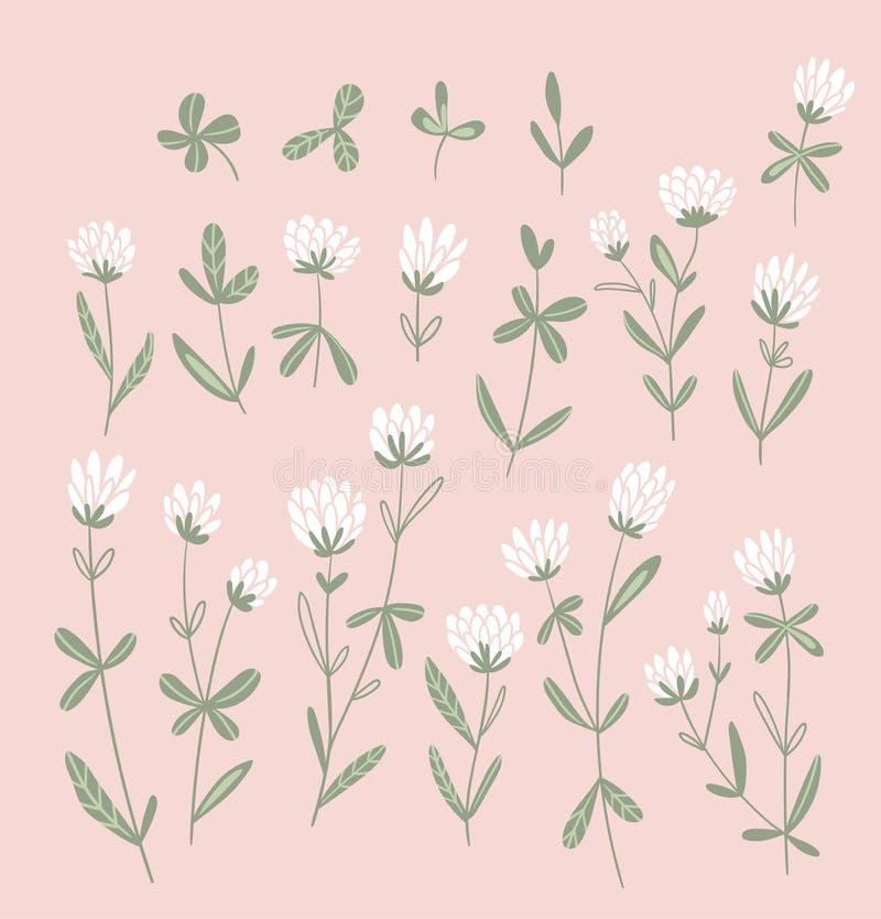 Fiori del trifoglio bianco isolati sui precedenti rosa Insieme floreale di vettore Elementi naturali disegnati a mano svegli per  illustrazione di stock