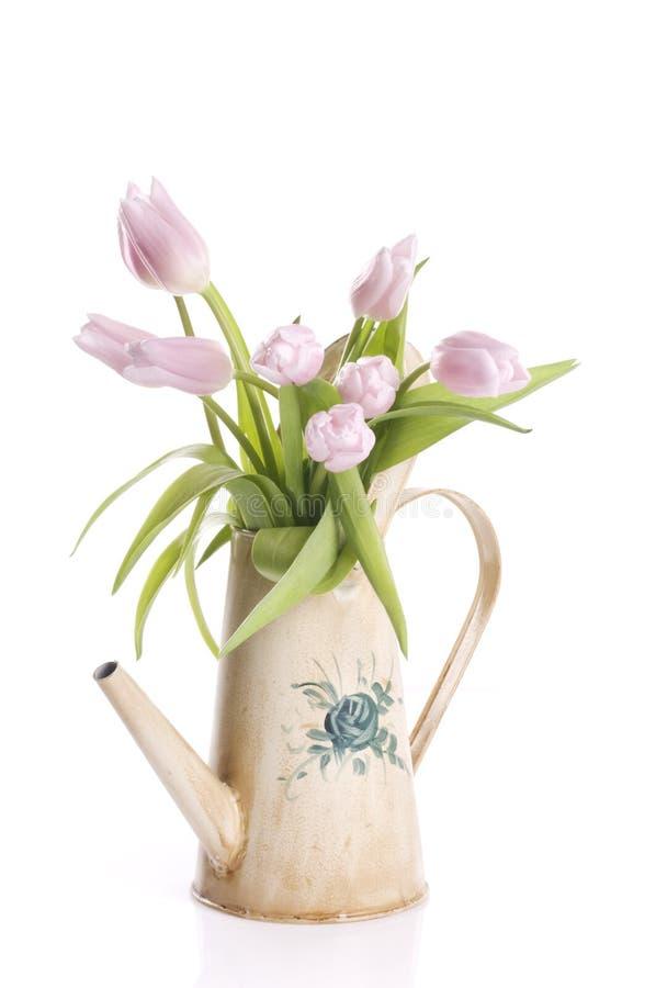 Fiori del tulipano della sorgente in una latta di innaffiatura fotografia stock libera da diritti