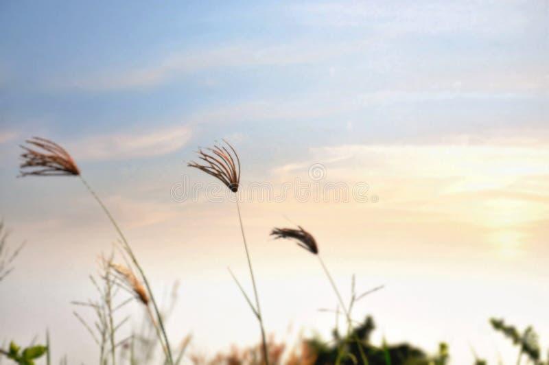 Fiori dell'erba nel campo immagini stock libere da diritti
