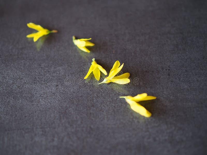 Fiori dell'estratto gialli su fondo grigio fotografia stock libera da diritti