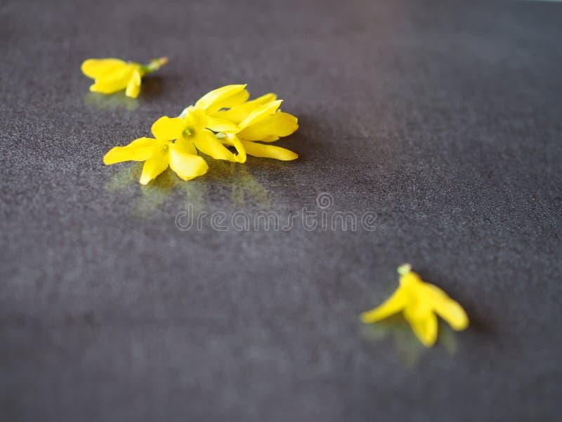 Fiori dell'estratto gialli su fondo grigio immagine stock libera da diritti