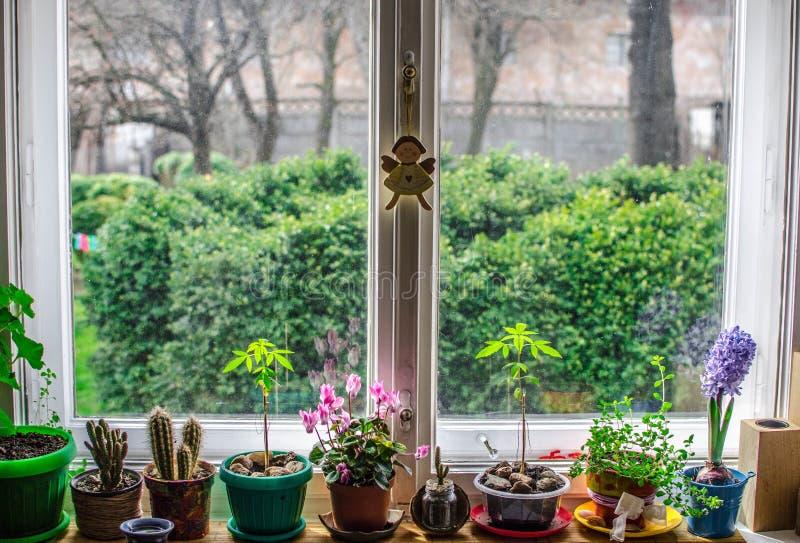 Fiori dell'interno della finestra fotografie stock