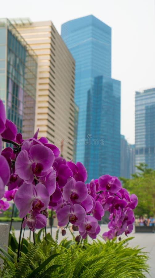 Fiori dell'orchidea con i grattacieli nei precedenti immagine stock