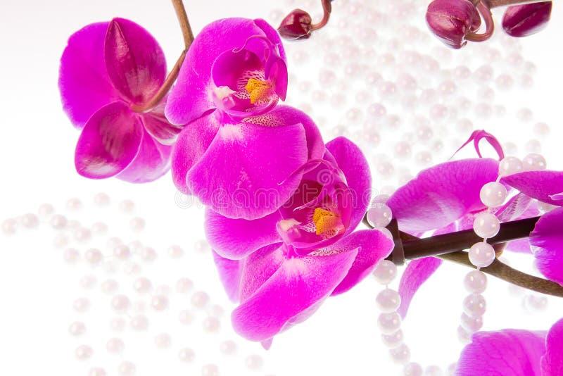 Fiori dell'orchidea e delle perle rosa dalle perle bianche fotografia stock