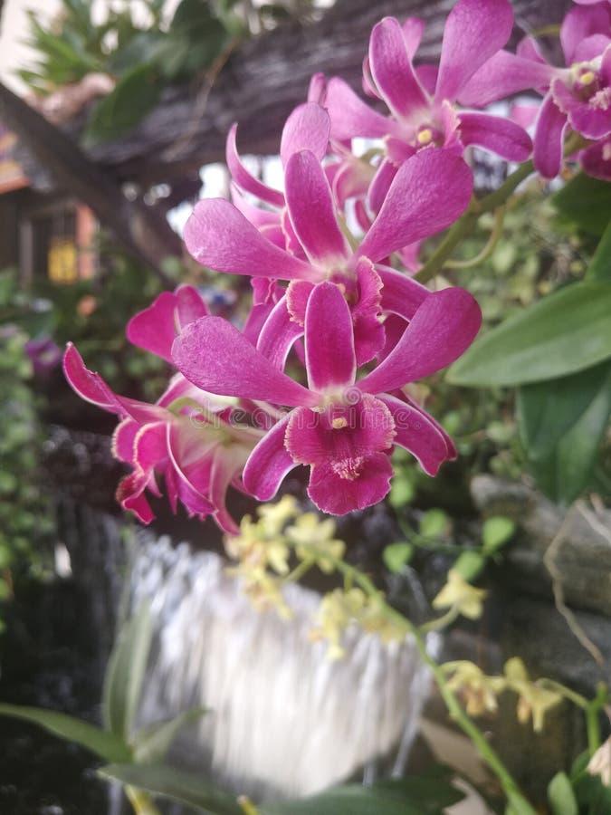 Fiori dell'orchidea e giardini rosa della cascata che si decorano fotografie stock libere da diritti