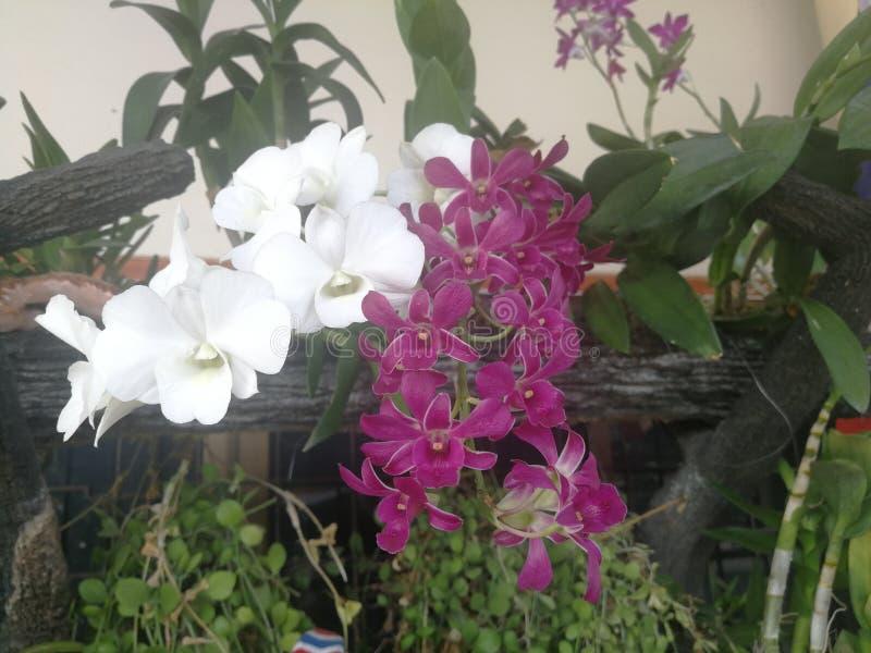 Fiori dell'orchidea e giardini rosa della cascata che si decorano immagini stock libere da diritti