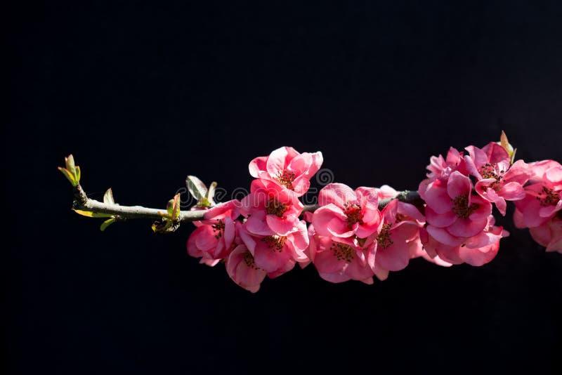 Fiori della fioritura dell'albero bei su un fondo immagini stock libere da diritti