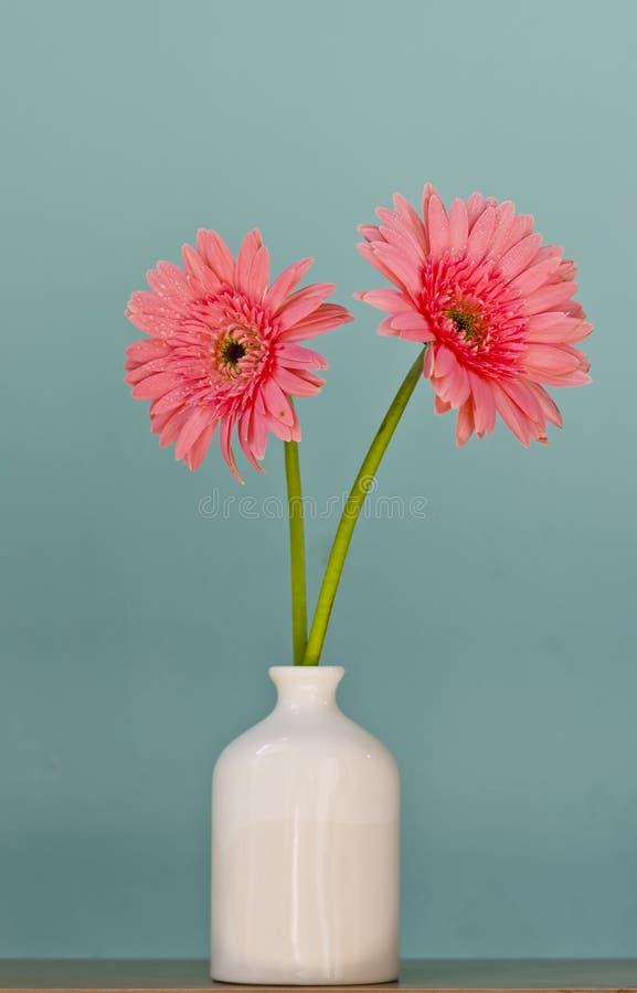 Fiori della gerbera in vaso immagine stock