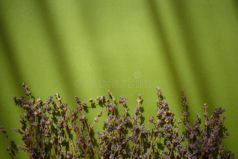 Fiori della lavanda su fondo verde con le ombre immagine stock libera da diritti