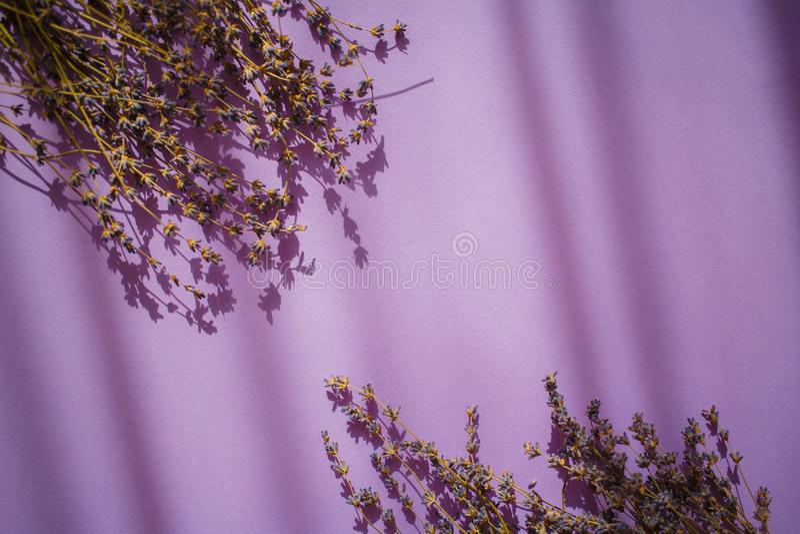 Fiori della lavanda su un fondo viola con le ombre immagini stock libere da diritti