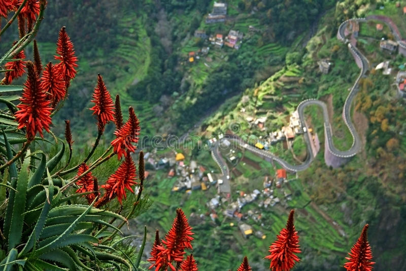 Fiori della Madera con la strada in basso di clif fotografie stock libere da diritti