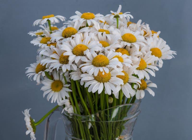 Fiori della margherita bianca Sorgente fotografia stock libera da diritti