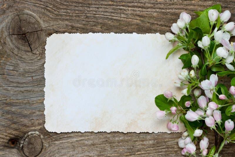 Fiori della mela della primavera su fondo di legno Disposizione piana, vista superiore fotografie stock