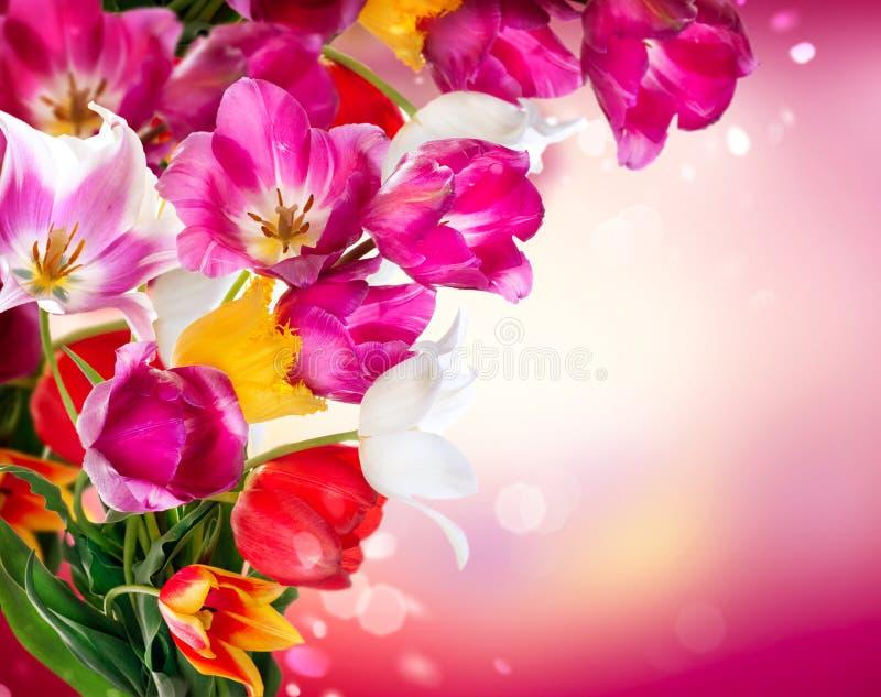 Tulipani della molla fotografia stock