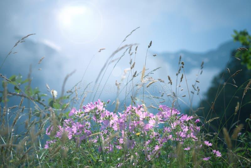 Fiori della montagna della primavera fotografie stock libere da diritti
