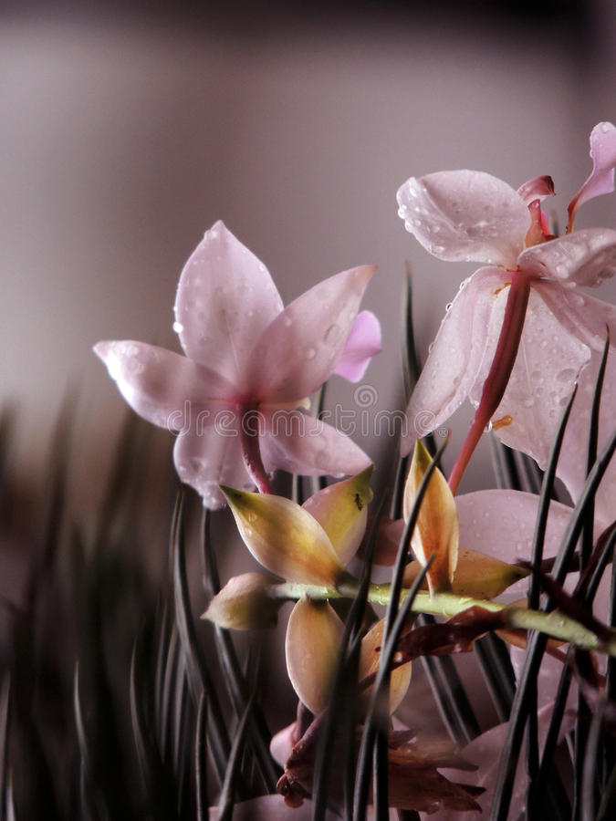 fiori della natura fotografie stock
