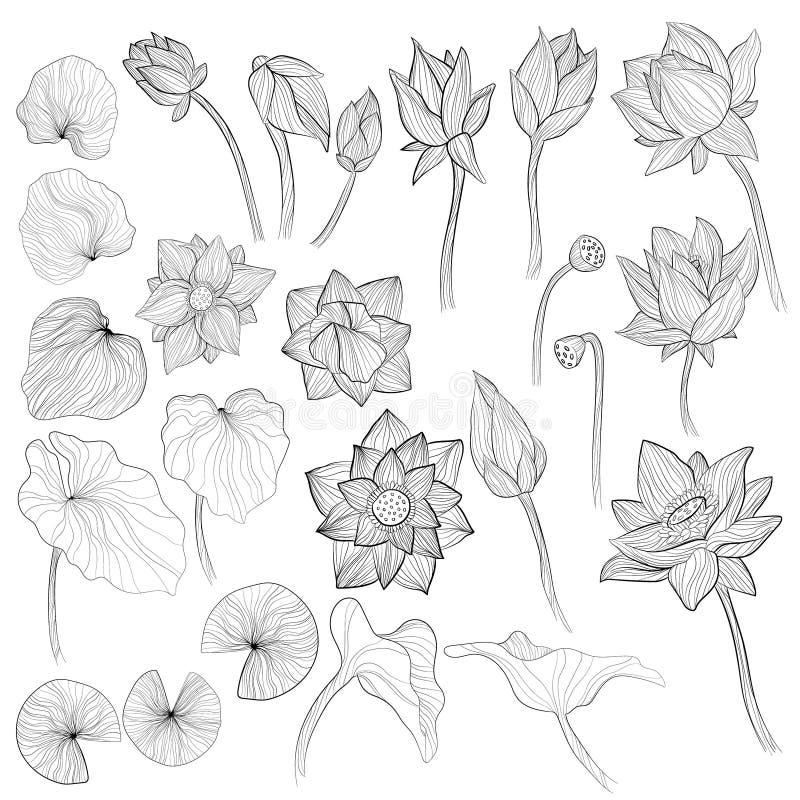 Fiori della ninfea, germoglio del fiore ed illustrazione di vettore del profilo delle foglie messi su fondo bianco Raccolta di ar royalty illustrazione gratis