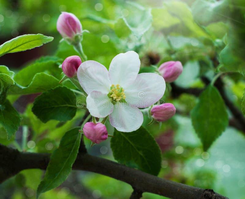 Download Fiori della primavera fotografia stock. Immagine di freschezza - 30830252
