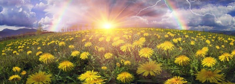 Fiori della primavera e di estate della radura fotografia - Fiori da giardino primavera estate ...