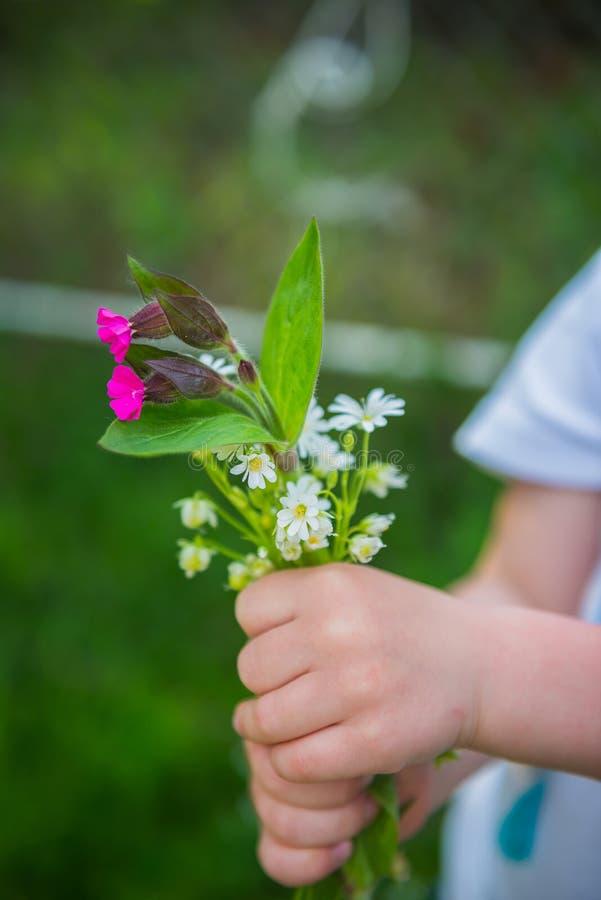 Fiori della primavera in mani del piccolo bambino immagine stock